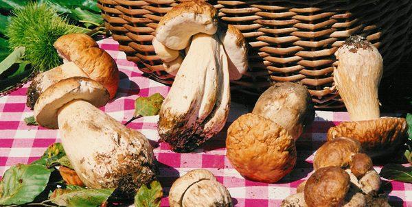 San Sisto: torna la Festa del Fungo