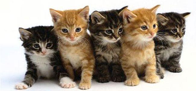 Cena di solidarietà per i gatti di Osiride